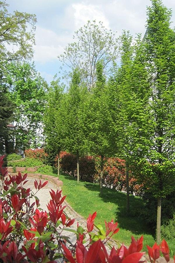Hausgarten der Familie N. Eingang - Landschaftsarchitektur Privat